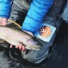 Исследование: Рыбы могут подсаживаться на метамфетамин из канализации