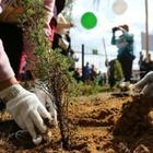 В Алматы началась осенняя посадка деревьев