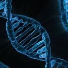 Анонимная организация хочет продать с аукциона образцы ДНК глав государств