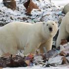 ЮНЕСКО: Около миллиона видов флоры и фауны может исчезнуть