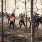 На месте вырубленных деревьев появились новые. Но высадил их не Sulpak