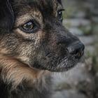 В каких регионах Казахстана жестче всего обращались с животными