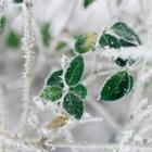 Мокрый снег и морозы ожидаются в Казахстане 18-20 апреля