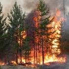 В Карагандинской области горит лес