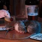 Бар с крысами открыли в Сан-Франциско