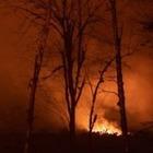 WWF: «Около 1,25 миллиарда животных погибло в пожарах в Австралии»