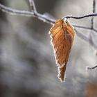Какой будет зима в Казахстане, рассказали синоптики. В ноябре заморозки