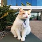 Кота взяли на работу охранником в Австралии
