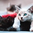 Исследование: Коты не любят трудиться ради еды