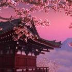 В Астане пройдет фестиваль «Японская весна»