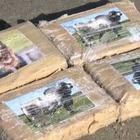 В Нидерландах жители охотятся на 300 пакетов с кокаином, выброшенных на пляж