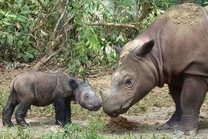 Рождение редких носорогов, советы от Далай-ламы по борьбе с гневом и теплые остановки в столице