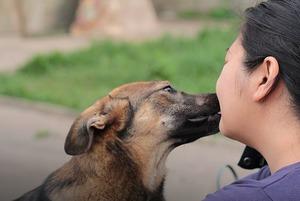 «У меня 35 собак и 9 кошек»: Алматинка Алма Омарова — о приюте и любви к животным