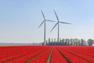 Нидерландыда өмір сүру үшін нені білу керек?
