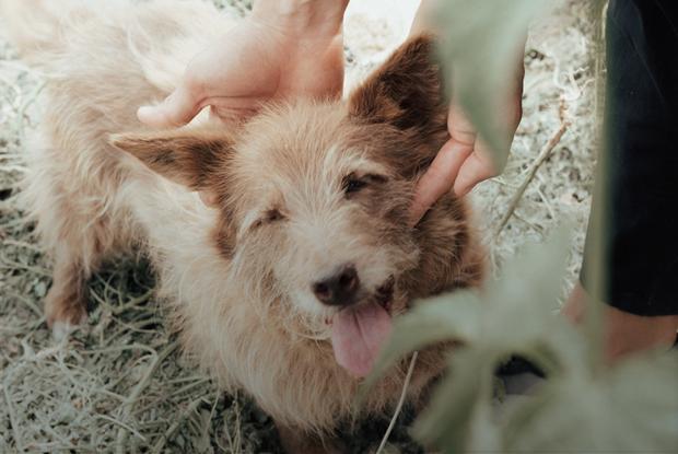 Приют для бездомных собак в Алматы