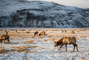 Хотят стать ковбоями и не запирают двери: Казахстанки о жизни в американской глубинке