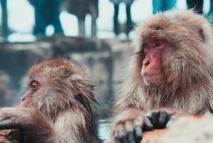 6 горячих источников в Алматинской области