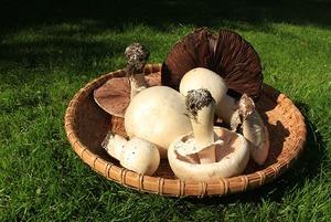 Как начать собирать грибы: Инструкция для новичков