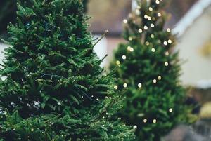 Где купить елку в Алматы?