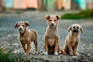 Что происходит с бездомными животными в Астане?