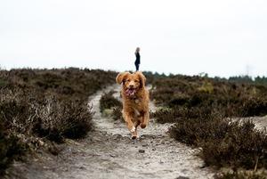 Какие собаки подходят аллергикам?