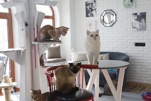 7 необычных заведений в Алматы: От бара в пожарной станции до кафе с котиками