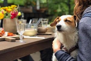 10 заведений в Алматы, куда пускают с домашними животными