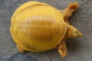 Портрет аль-Фараби из листьев, бесплатное обучение бизнесу для казахстанок и редкая черепаха