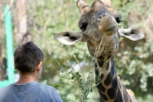 Что происходит в алматинском зоопарке?