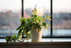 Почему зимой растениям нужен ламповый свет