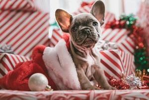 20 идей для подарков на «Тайного Санту»