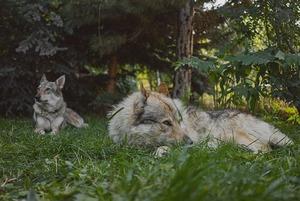 Влчаки, эублефар и гульдовые амадины: Каких необычных питомцев держат алматинцы